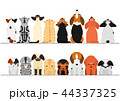 犬と猫たちのボーダーセット 見上げる 見下ろす 44337325
