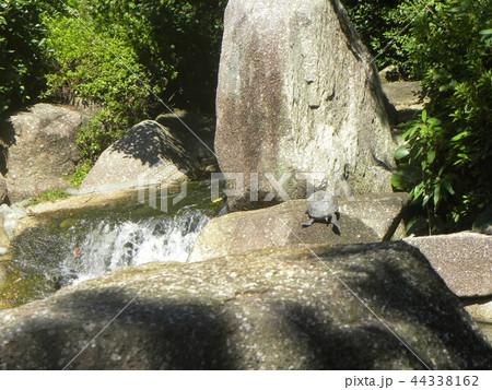 稲毛海浜公園の池の亀 44338162