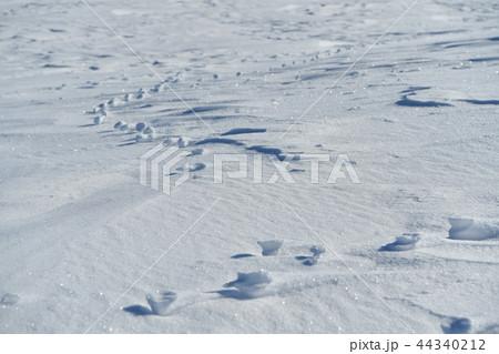 雪原の紋様 44340212