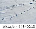 雪原の紋様 44340213
