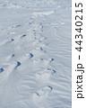 雪原の紋様 44340215