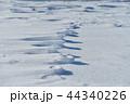 雪原の紋様 44340226