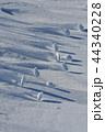 雪原の紋様 44340228
