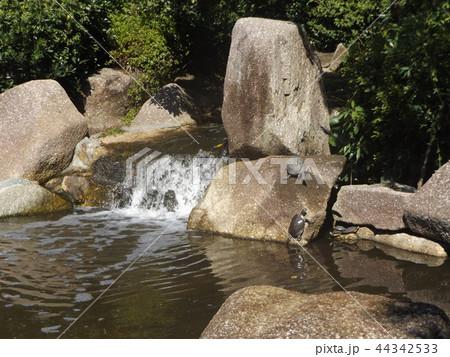 稲毛海浜公園の池の亀 44342533