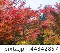 秋 紅葉 風景の写真 44342857