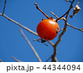 柿と蜂 44344094