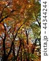 自然 秋 紅葉の写真 44344244