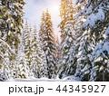 ウィンター ウインター 冬の写真 44345927