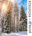 ウィンター ウインター 冬の写真 44345928