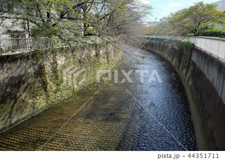 神田川 東 44351711