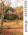 京都・秋の祇王寺 44353556