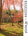 京都・秋の祇王寺 44353558