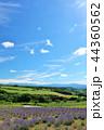 青空 夏 花畑の写真 44360562