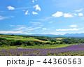 青空 夏 花畑の写真 44360563