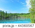 青空 青い池 池の写真 44360567