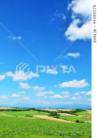 北海道 夏の青空と美瑛の大地 44360570