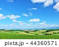 青空 夏 美瑛の写真 44360571