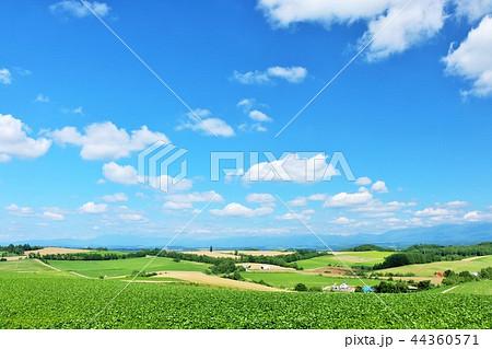 北海道 夏の青空と美瑛の大地 44360571
