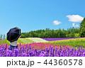 北海道 青空の花畑と日傘の女性 44360578