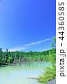 青空 夏 池の写真 44360585