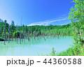 青空 夏 池の写真 44360588