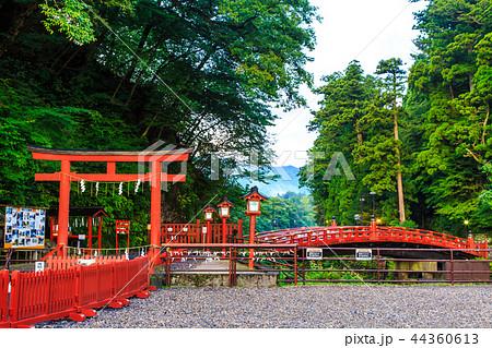 新緑の神橋 世界遺産 【栃木県日光市】 44360613