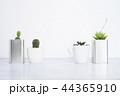 サボテン さぼてん 仙人掌の写真 44365910