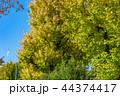 紅葉 秋 晴れの写真 44374417