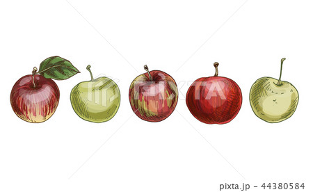 Set of red and green apples isolated  44380584