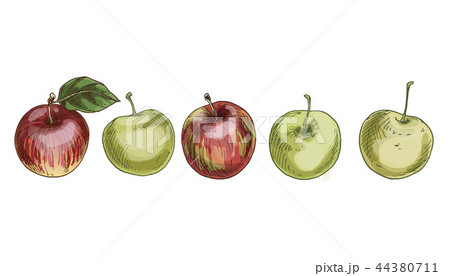 Set of red and green apples isolated on white 44380711