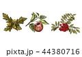 りんご リンゴ ナナカマドのイラスト 44380716