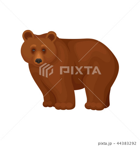 Cartoon character of large brown bear standing on four paws. Forest animal. Flat vector for promo 44383292