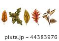 リーフ 紅葉 葉のイラスト 44383976
