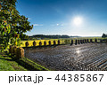 田舎 農作物 作物の写真 44385867