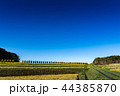 米 農作物 日本の写真 44385870