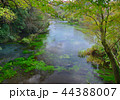 柿田川公園 柿田川 河川の写真 44388007