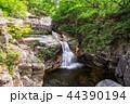 小川 森林 林の写真 44390194