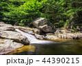 葉 森林 林の写真 44390215