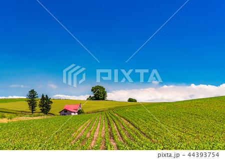 《北海道》夏の美瑛・赤い屋根の家と田園風景 44393754