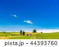 畑 美瑛町 美瑛の丘の写真 44393760