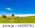 畑 美瑛町 美瑛の丘の写真 44393761