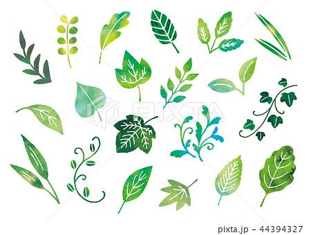 葉手描き水彩のイラスト素材 [44394327] - PIXTA