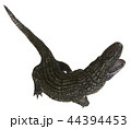 Alligator isolated on white background 3d illustration 44394453