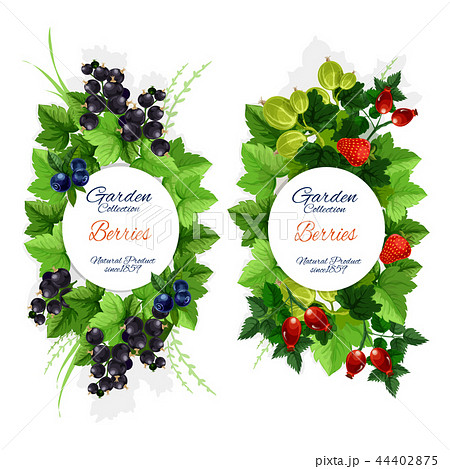 Natural garden berry fruits harvest, vector 44402875