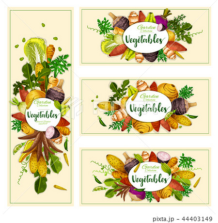 Vegetables and exotic tubers, vector 44403149