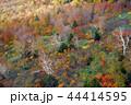 八甲田山 紅葉 44414595