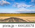 栗原市の収穫期をむかえた田園の中を走る東北本線貨物列車金太郎 44416078