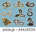 ヘビ 蛇 動物のイラスト 44416534