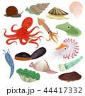 かい 貝 貝類のイラスト 44417332