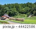 農村 稲掛け 田舎の写真 44422586